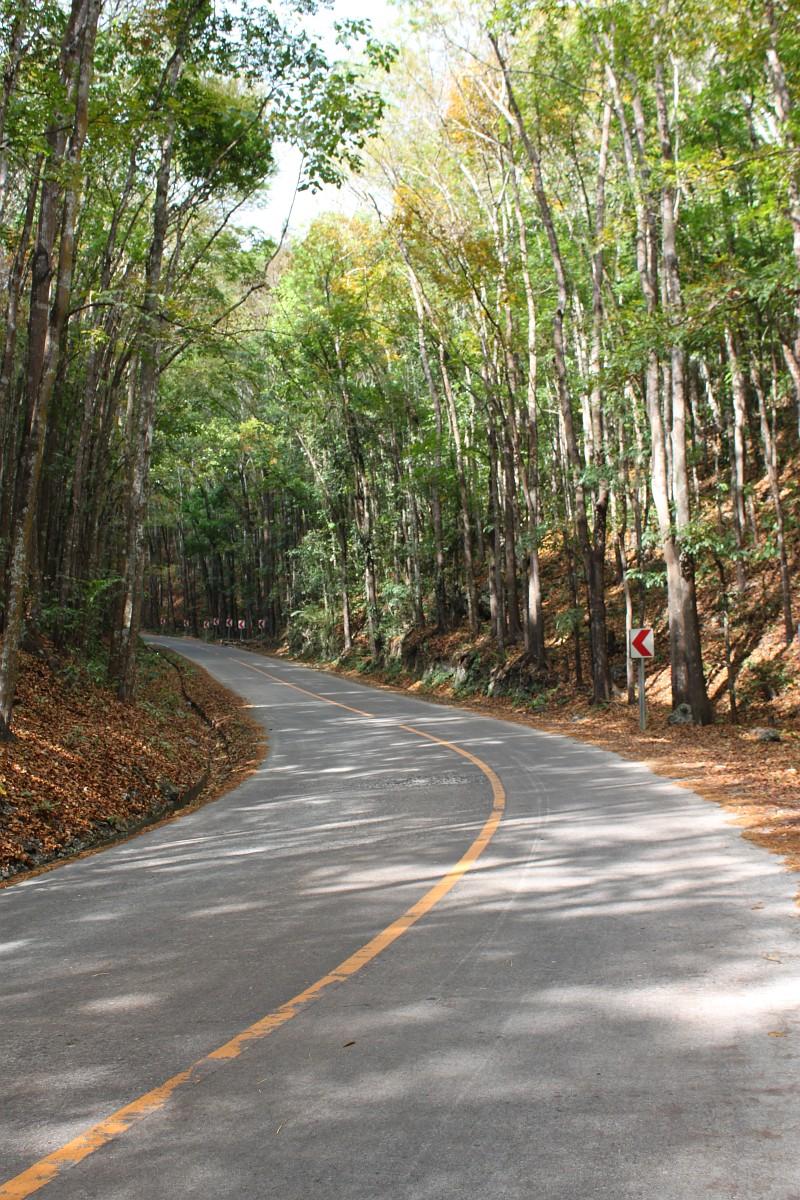 Bohol Man Made Forest