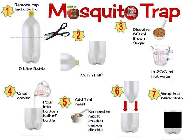 Best Homemade Mosquito Trap That Really Works Info Bohol